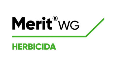 Merit WG