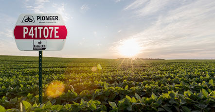 Pioneer® brand Enlist E3 soybeans.