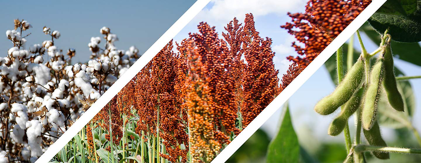 TransformWG_Cotton_Sorghum_Soybean_Header_mobile