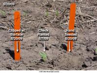 13 Days After Planting (V1 Stage)
