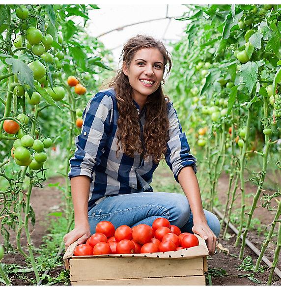 Zorvec Tomato Grower