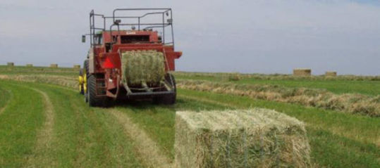 This is a photo showing alfalfa baling.