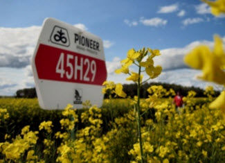 Pioneer Field Sign - Canola