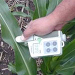 Photo: Using the SPAD 502 chlorophyll meter on corn.