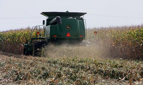 Photo: Corn harvest losses.