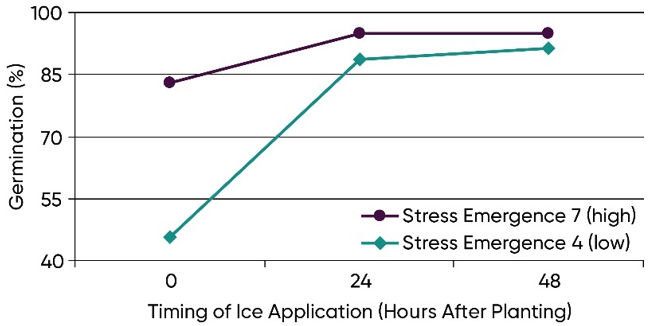 Chart showing germination of two hybrids with stress emergence scores of 4 (low) and 7 (high) following imbibitional chilling induced by melting ice