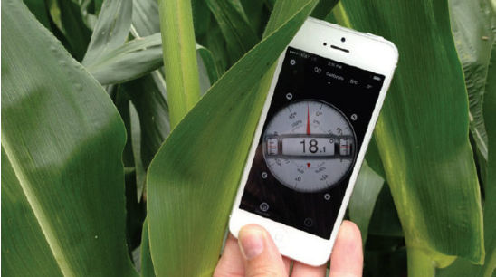 Leaf angle measurements were taken using aclinometer smartphone app.