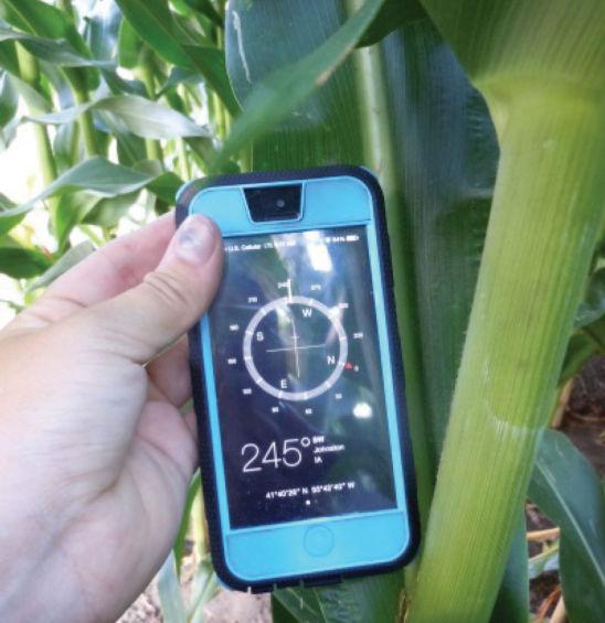 Corn leaf orientation measured using a compass smartphone app.