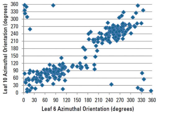 Azimuthal orientation of leaf 10 compared to leaf 6 for all plants sampled.