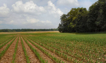 Corn-on-corn acres are increasing on many farms.