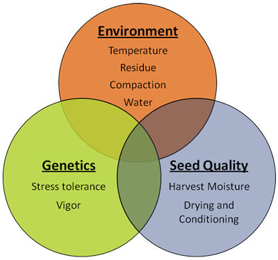 Some critical environmental, genetic and seed quality factors that affect corn stand establishment.