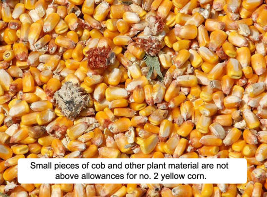 Small pieces of cob and other plant material are not above allowances for no. 2 yellow corn.