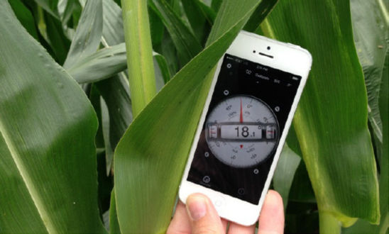 Photo: Leaf measurement app on smartphone