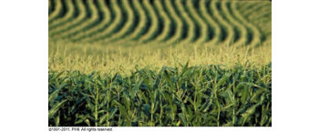 Hybrid response to plant population