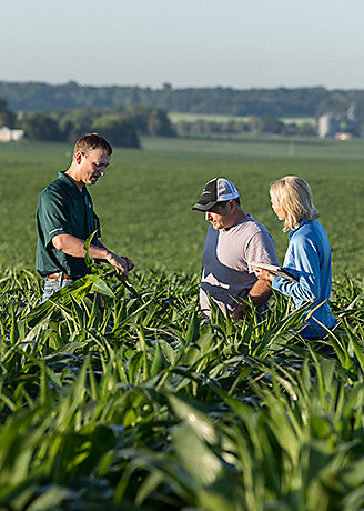 Crew in corn field reviewing crop conditions, late summer.