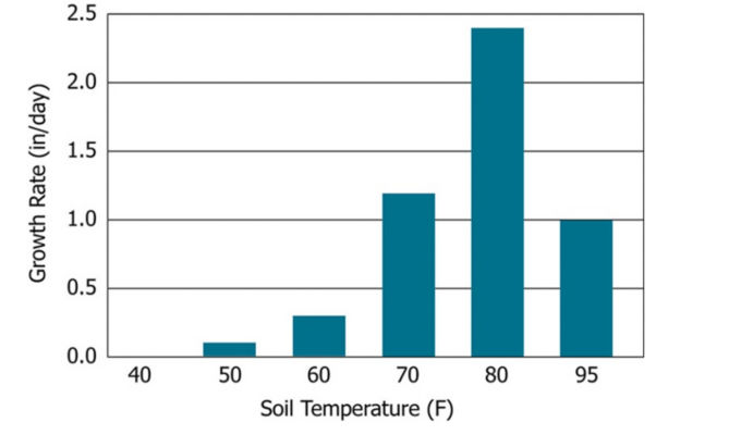 Prolonged exposure to soil temperatures below 50º F promotes seed deterioration and seedling disease.