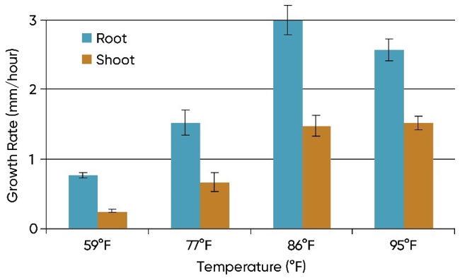 Chart showing average early root and shoot growth rates for 3 hybrids under 4 soil temperatures ranging from 59 to 95° F.
