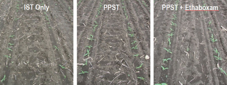 Side by side comparison of insecticide seed treatment (IST) only, standard PPST, and PPST + ethaboxam.