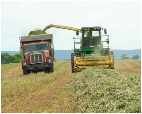 Photo: alfalfa harvest