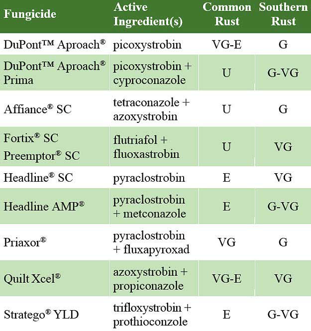 This table shows foliar fungicide efficacy on common and southern rust in corn.