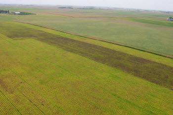 Aerial image of a soybean field in Minnesota sprayed for soybean aphids and a non-sprayed strip at edge.