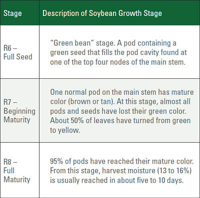 Soybean growth stages R6 to R8.