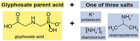 The glyphosate parent acid and potential salts; potassium, diammonium, and isopropylamine.