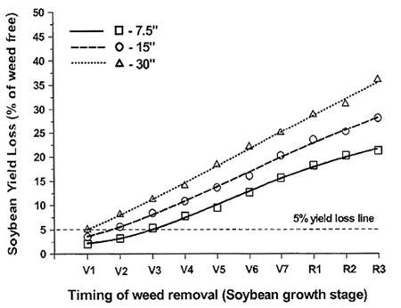 Influence of weed removal timing and row spacing on soybean yield loss.