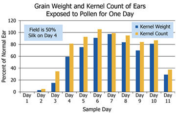 Grain weight and kernel count of corn ears exposed to pollen for one day.