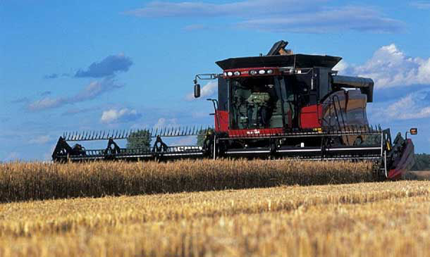 Photo of combine harvesting wheat.