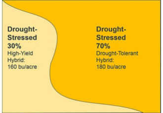 Scenario in which variable hybrid placement does not match field conditions. Placement of the high yield hybrid in a zone that ends up being drought-stressed, yield results.