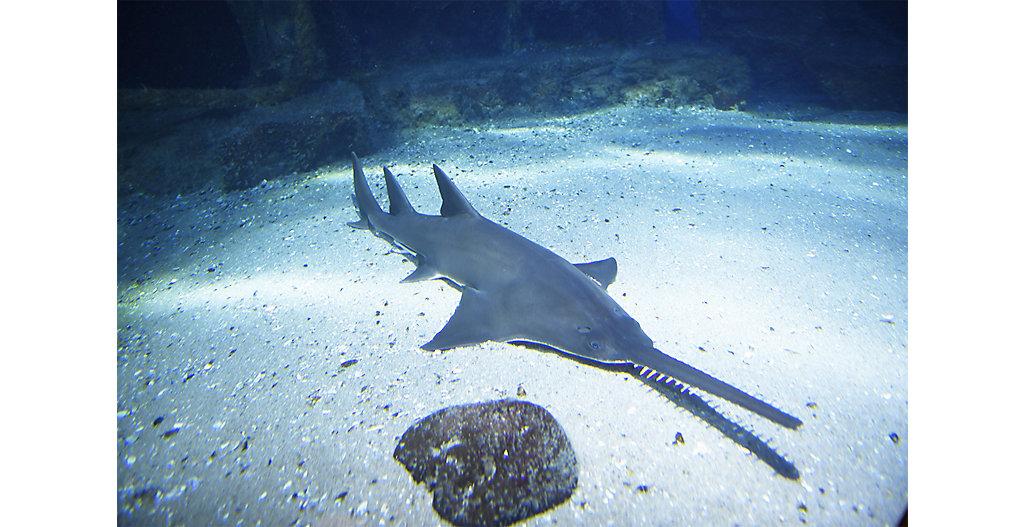 Sealifedinner Shark