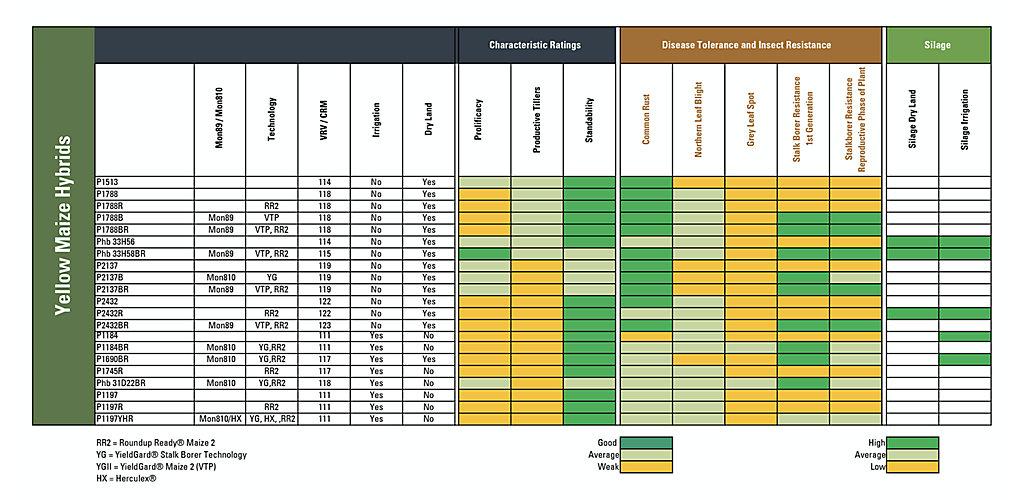 SeedCharacteristcs-YellowMaize