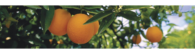 Citrus Beauty