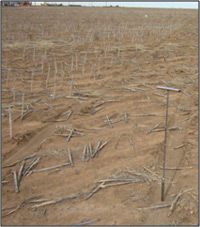 Sorghum responds well to nutrient applications, especially in lower testing soils.