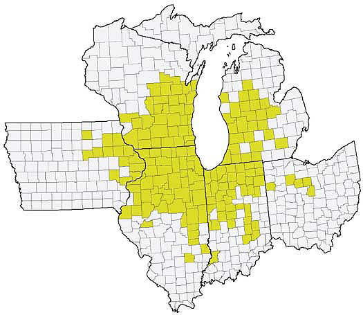 Midwest map showing counties with confirmed incidence of tar spot as of January 2019.