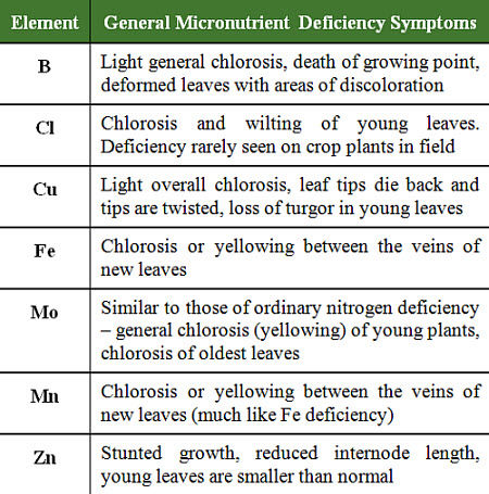 General micronutrient deficiency symptoms