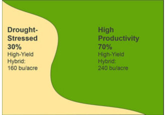 Primarily high-productivity field planted entirely to a high yield potential hybrid, yield results.