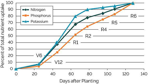 Graph showing estimated uptake of nitrogen, phosphorus, and potassium from the soil at critical corn growth stages.