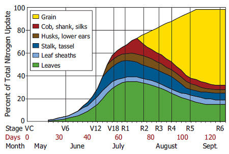 Timing of nitrogen uptake in corn. Source: Iowa State University Extension.