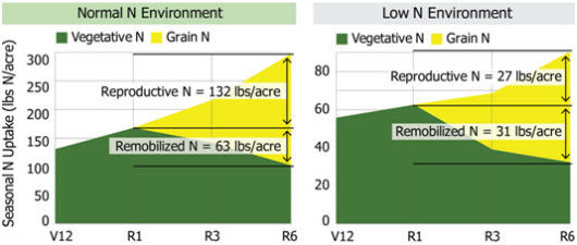 Seasonal N uptake (lbs N/acre) for hybrids grown under normal (left) and low (right) N supply near Sciota, Ill., 2011.