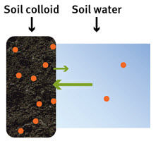 Nutrient transfer between soil colloid to soil water.