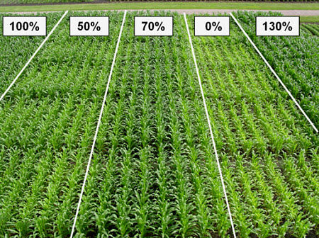 Evaluation of corn response to a range of N rates at a Pioneer research trial.