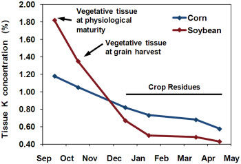 Decline in vegetative potassium (K) by corn and soybean following physiological maturity.