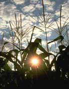 Photo: Photosynthesis