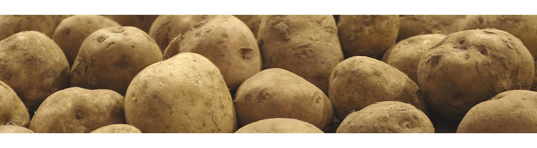 IMG-Potato-1-Beauty-Primary_1-1.jpg