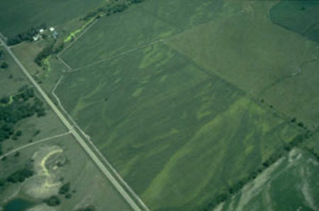 Aerial view of corn field showing areas of severe N deficiency due to excessive rainfall and leaching of nitrogen.
