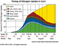 Timing of Rescue Nitrogen Application Demo