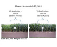 V2 and V8 nitrogen applications