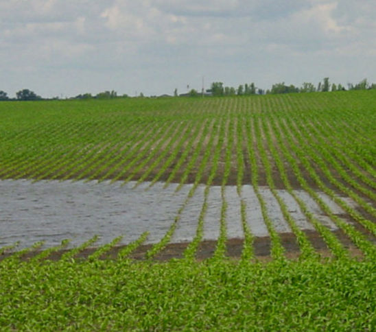 Partly flooded field